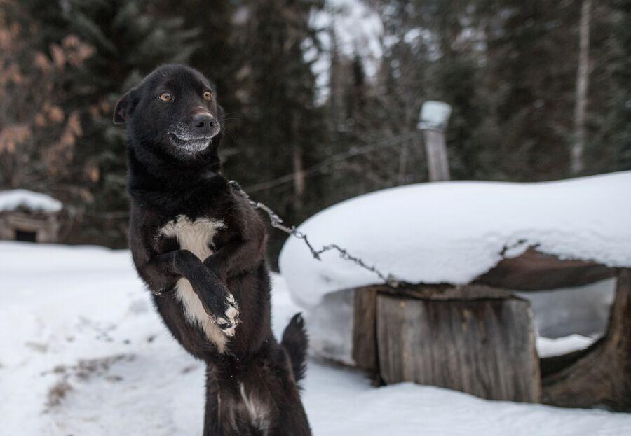 Собака на заимке Лыковых