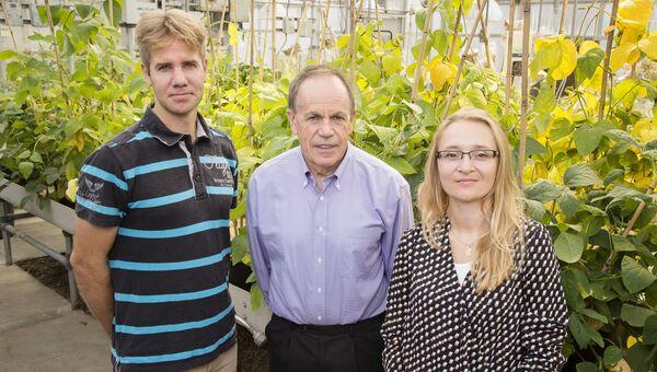 Генетики и ГМО-табак, способный пережить сильные засухи
