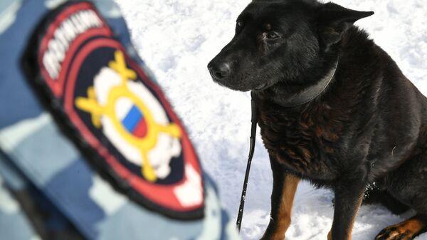 Служебная собака во время занятий в Центре кинологической службы МВД в Москве