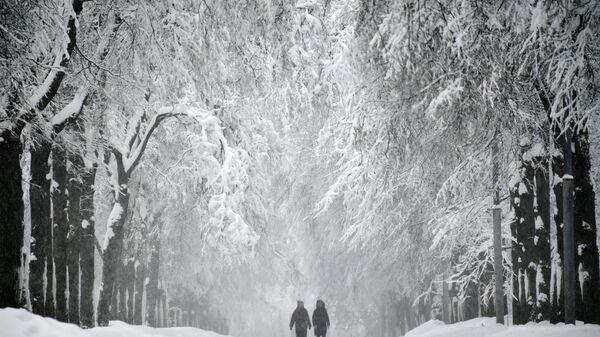 Заснеженная аллея на Воробьевых горах в Москве
