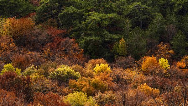 В Крыму готовят программу восстановления лесополос