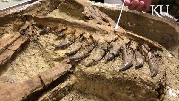 Останки тираннозавра, найденные в Монтане