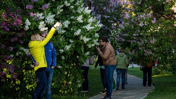 Цветение сирени в Москве