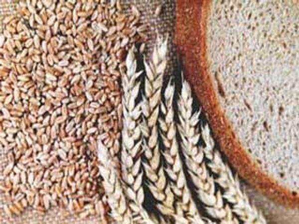Инцидент с пшеницей не повлияет на отношения Египта с Россией - МИД