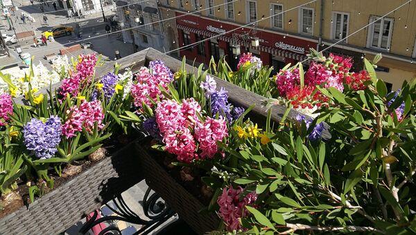 Цветы на одном из балконов в Камергерском переулке
