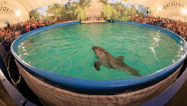 Шоу дельфинов в Калининграде