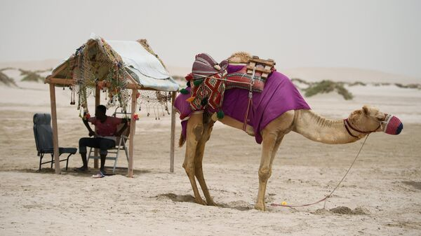 Погонщик с верблюдом в пустыне Khor Al Adaid в Дохе