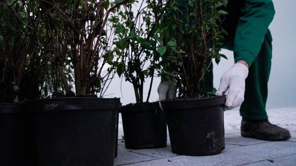 Высадка кустов в Москве в рамках программы благоустройства. Архивное фото