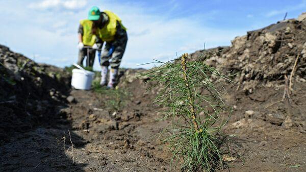Активисты ОНФ посадили 2 тысячи деревьев на месте бывшего полигона в Туле