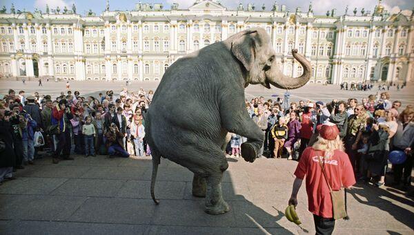 Цирковой номер со слоном на Дворцовой площади. Архивное фото.
