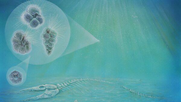 Так художник представил себе процесс накопления останков планктона на дне кратера Чиксулуб