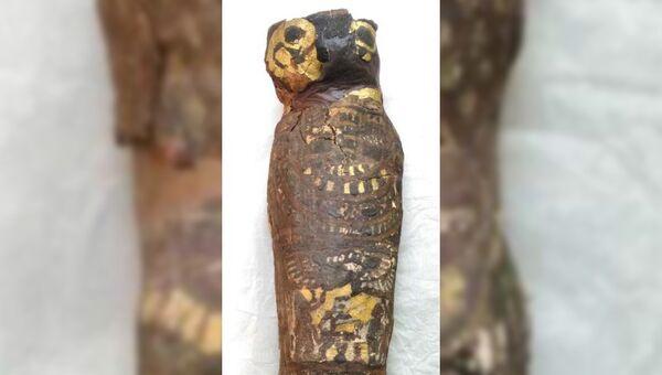 Мумия сокола, внутри которой скрывается тело мертворожденного ребенка