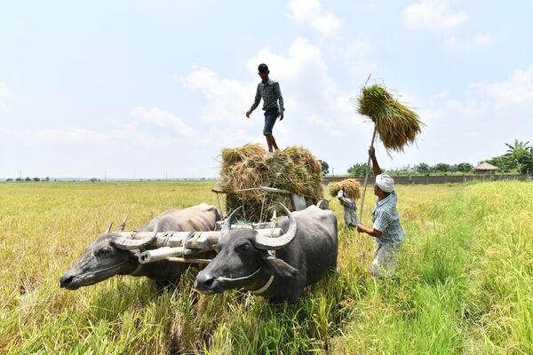 Индийские фермеры в деревне Burha Mayong, Индия