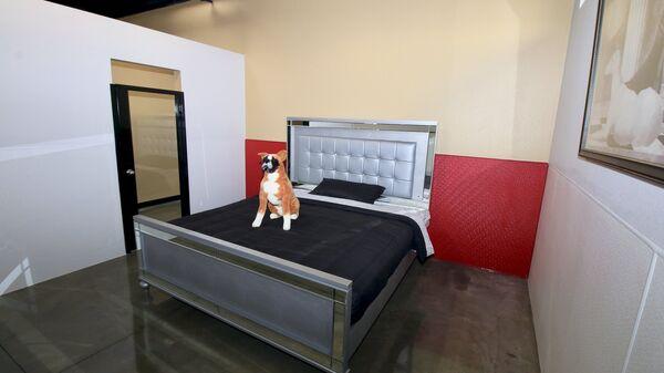 Номер для собак в отеле Barkingham Pet Hotel в Калифорнии