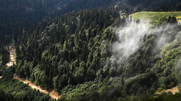 Склоны гор главного Кавказского хребта