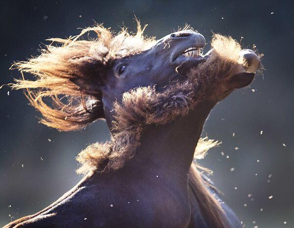 Лошадь и ее жеребенок на лугу неподалеку от Франкфурта в Германии.