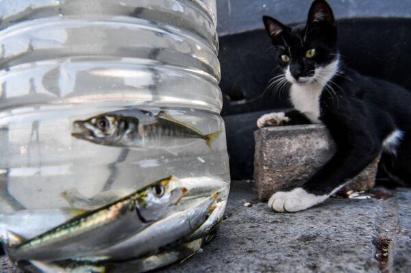 Кот наблюдает за рыбками в пластиковой бутылке в Стамбуле.