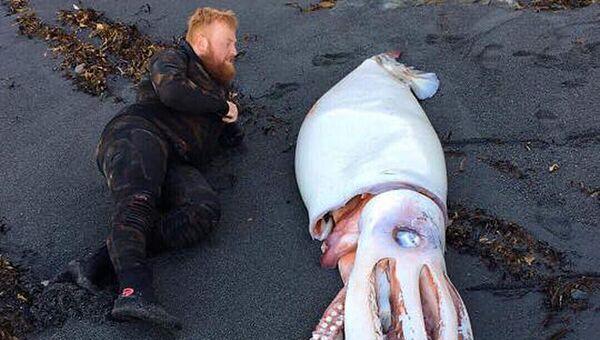 Гигантский кальмар, найденный недалеко от Веллингтона, Новая Зеландия