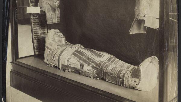 Древнеегипетская мумия, выставленная в музее Стэнфорда
