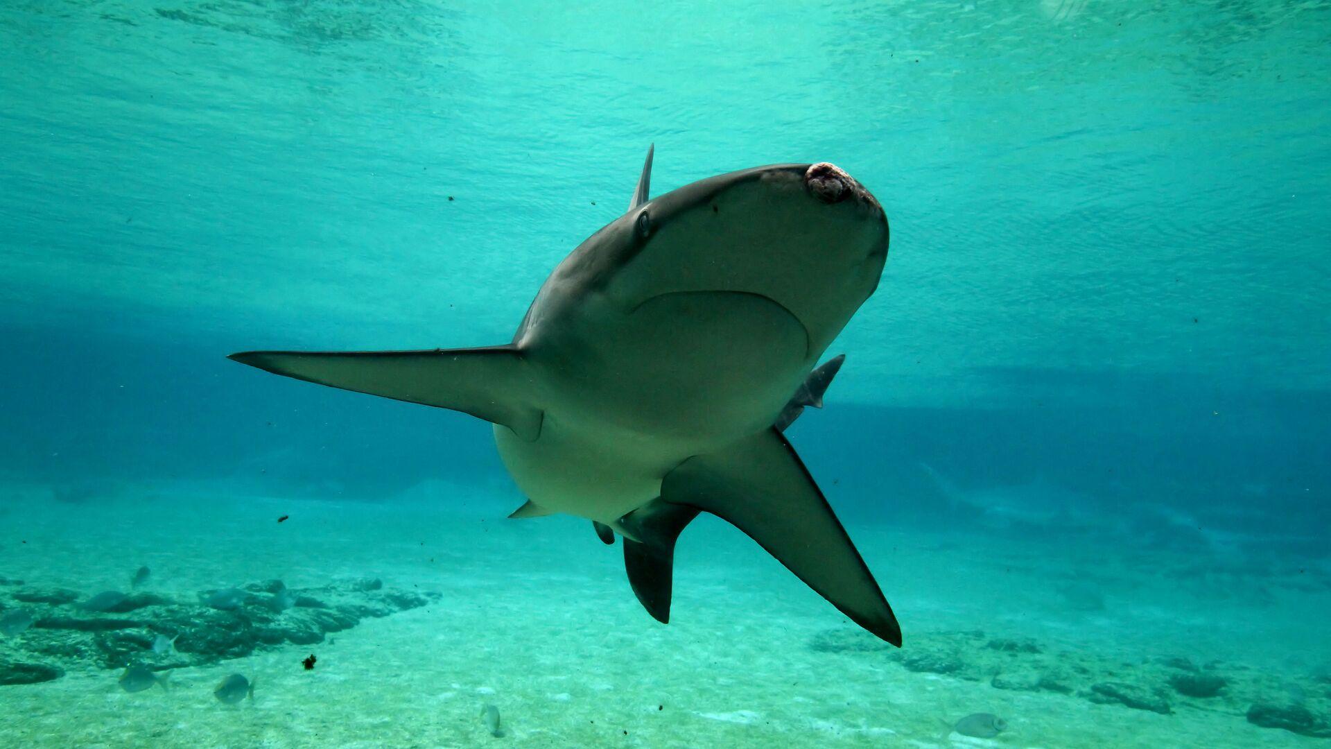 1527882155 0:270:5184:3186 1920x0 80 0 0 6b0d040ac37161772a8343182afef3e4 - В Австралии серфер рассказал, как акула пыталась утащить его под воду