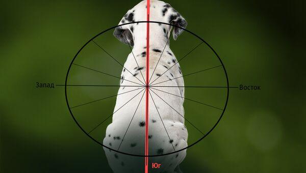 Собака, стороны света