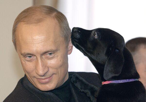 В.Путин с ценком лабрадора Кони