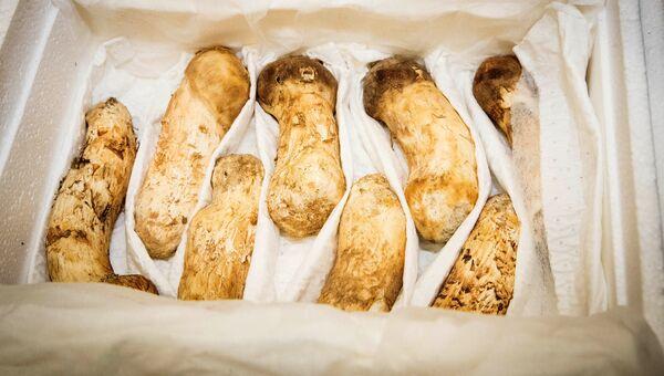 Деликатесные грибы, подаренные лидером КНДР Ким Чен Ыном подарил президенту Южной Кореи Мун Чжэ Ину