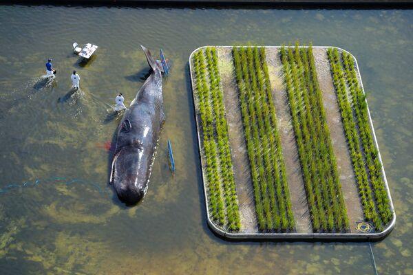 Скульптура творческого коллектива из Бельгии Captain Boomer в виде выброшенного на берег кита в Мадриде