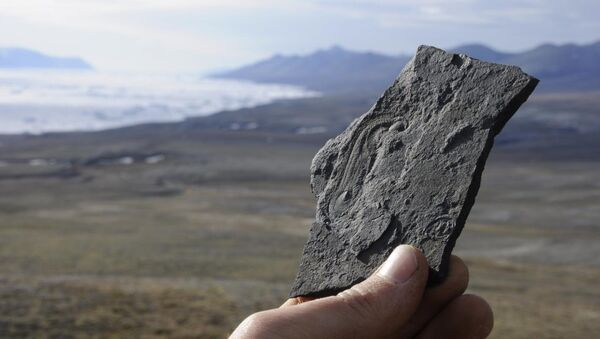 Халкиерия евангелиста – загадочное древнее животное из Гренландии (Сириус пассет)