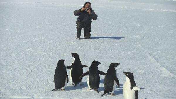 Пингвины - частые гости полярников станции Молодежная. 34-я Советская Антарктическая экспедиция. Осень 1988 - весна 1989 годов
