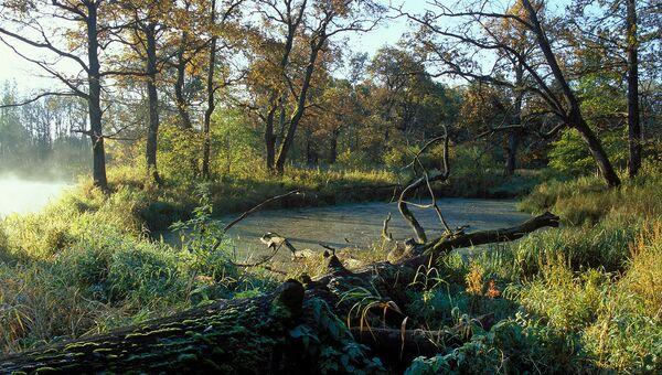 Заповедник Брянский лес открыл набор волонтеров для обустройства тропы