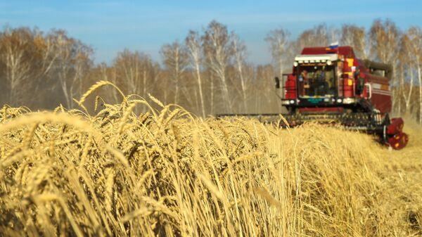 Уборка урожая яровой пшеницы. Архивное фото