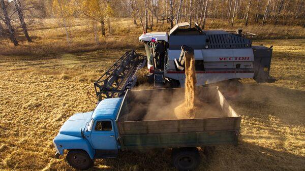 Уборка урожая яровой пшеницы