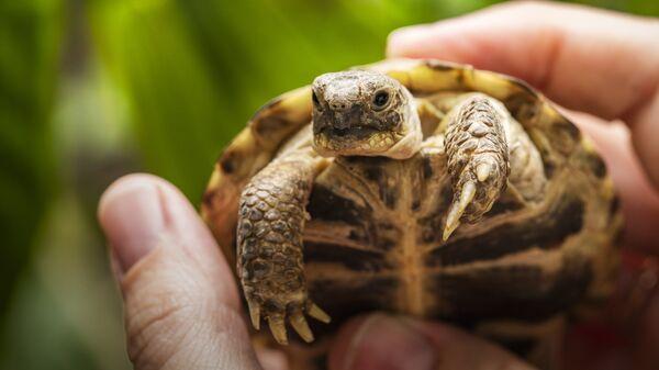 Черепаха в руке
