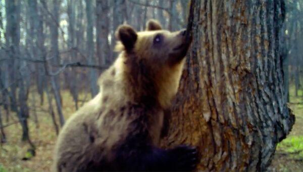 Медведь лакомится медом в национальном парке Башкирия. Стоп-кадр записи камеры видеонаблюдения