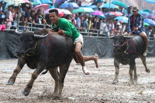 Участники фестиваля гонок на быках в Таиланде