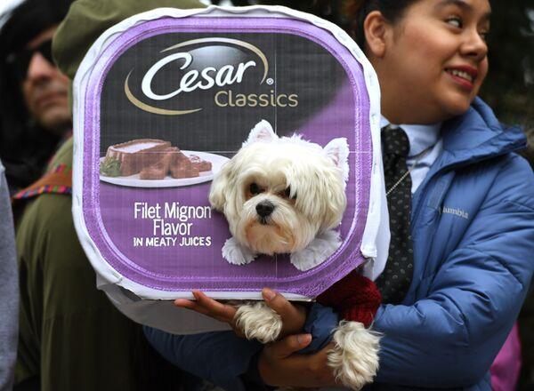 Собака в костюме на ежегодном параде в канун Хеллоуина на площади Томпкинс в Нью-Йорке