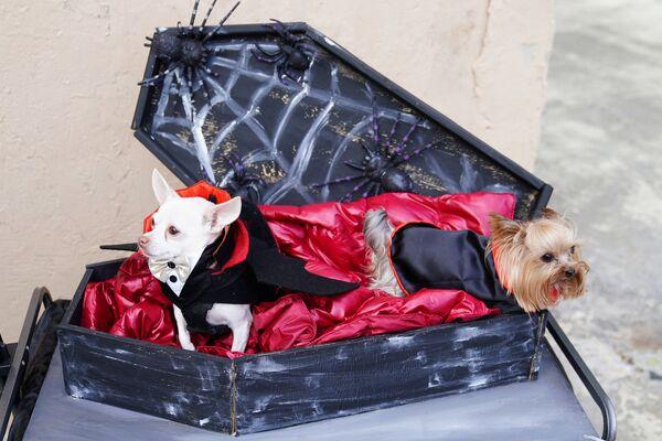 Собаки в костюме на ежегодном параде в канун Хеллоуина в парке Ист-Ривер Нью-Йорка