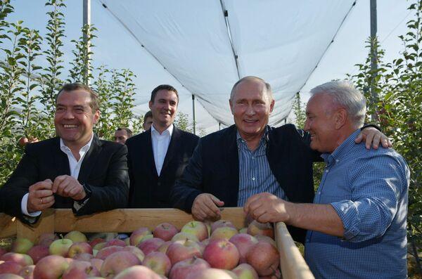 Президент РФ Владимир Путин и председатель правительства РФ Дмитрий Медведев во время осмотра яблоневых садов в Ставропольском крае