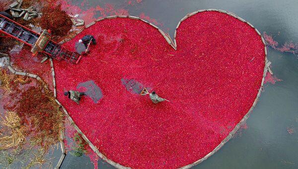 Снимок Клюквенное сердце фотографа Сергея Гапона из Белоруссии, занявший первое место в категории Моя планета. Одиночная работа