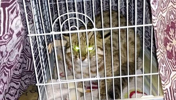 К визит-центру нацпарка Земля леопарда в Приморье подкинули котенка краснокнижного дальневосточного лесного кота