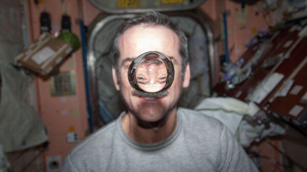 Новый вид земляной пчелы назвали в честь астронавта Хэдфилда