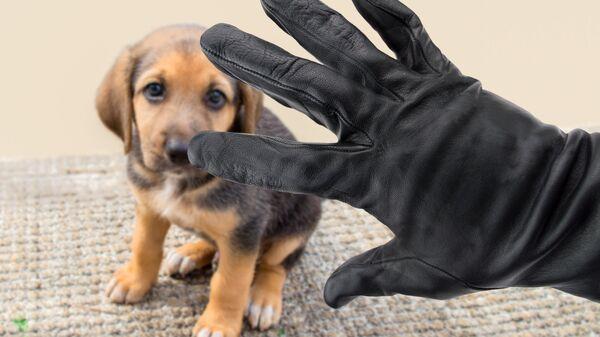Мужская рука в перчатке возле собаки