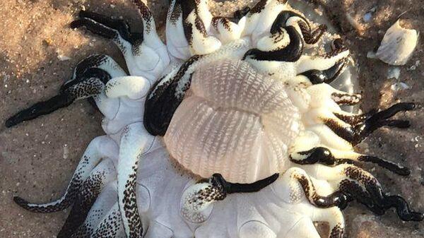 Изображение морского существа на пляже в Австралии, опубликованное на сайте Reddit