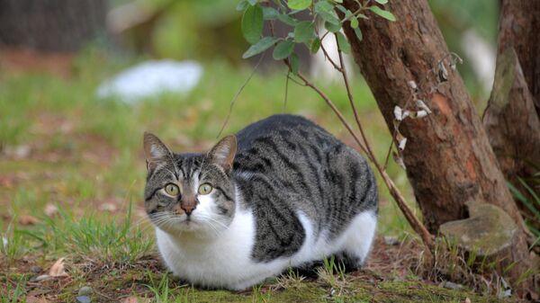 Заполярный кот, санаторий «Заполярье», Сочи