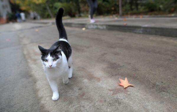 Кошка Горгиппийская, Анапа
