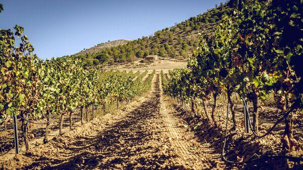 Виноградники, Рибера-дель-Дуэро, Испания