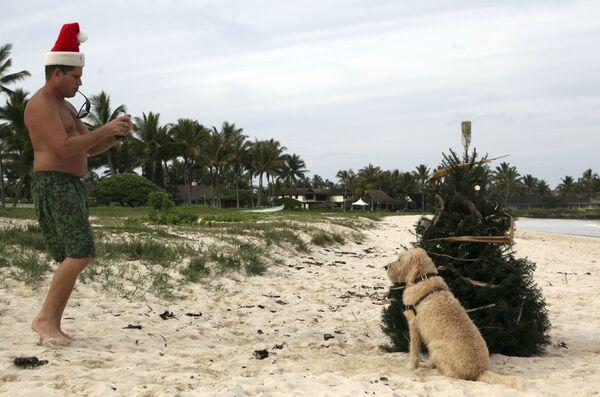 Мужчина фотографирует собаку возле елки на пляже в Кайлуа, Гавайи