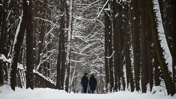 В Дмитровском округе Подмосковья создается ООПТ с 250-летними деревьями