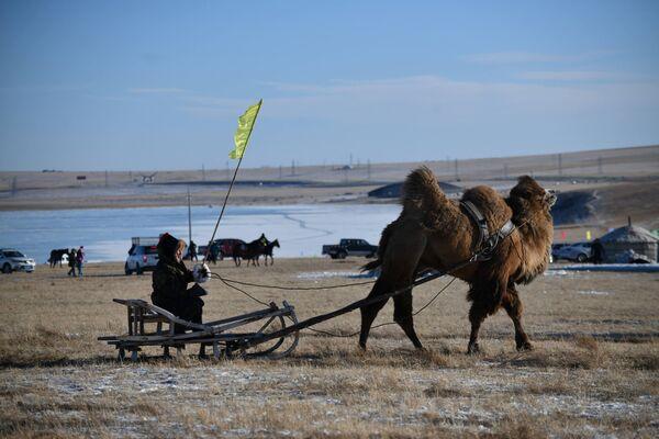 Мужчина едет на верблюжьей повозке во время зимней ярмарки Наадам в Хулун-Буире